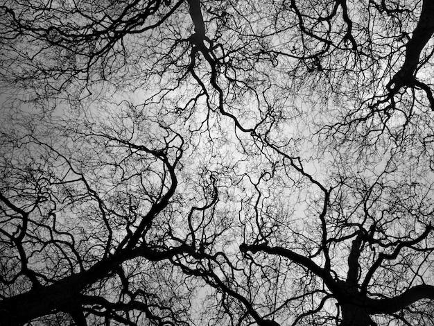 Зимние деревья без листьев на белом фоне