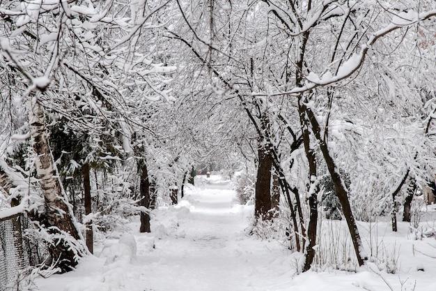 カルパティア山脈の森の冬景色