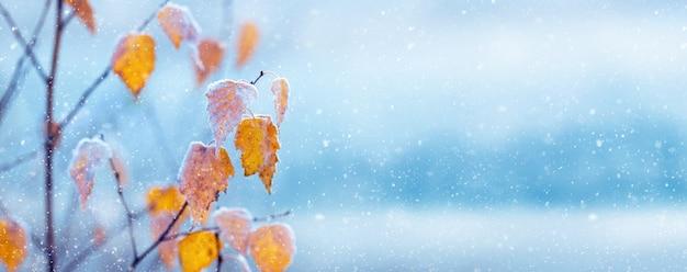 ぼやけた背景、パノラマ、コピースペースに霜で覆われた黄色の白樺の葉の冬のビュー