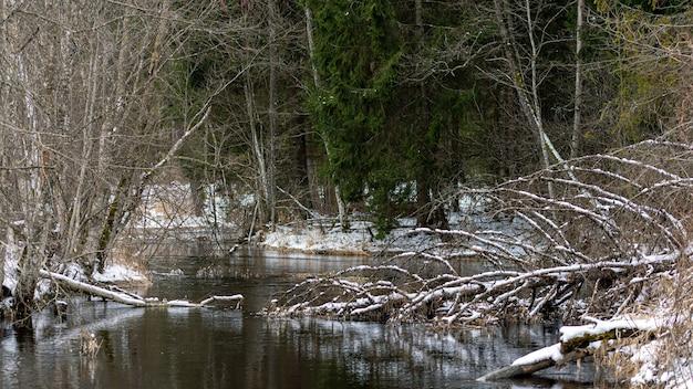 小さな川の冬の景色、森の川と冬の風景