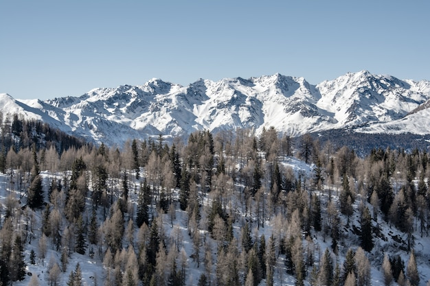 冬。手前に針葉樹林がある山の雪をかぶった山々の眺め。