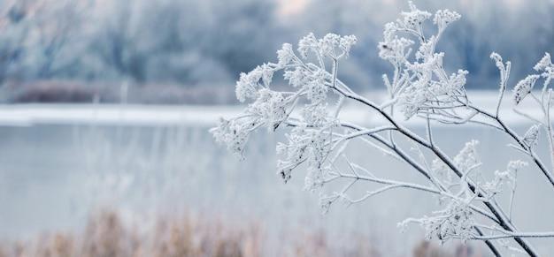 Зимний вид с замороженными ветвями растений на реке. зимний пейзаж с рекой и инеем