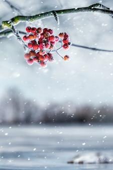Зимний вид с ягодами красной рябины во время снегопада