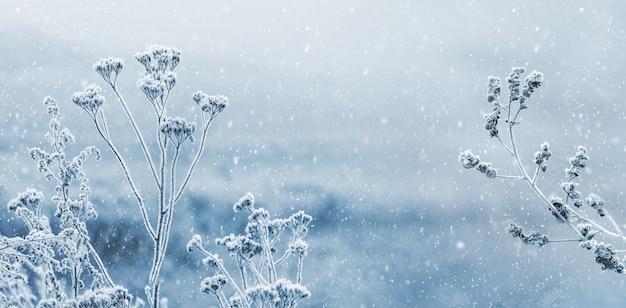 降雪時にぼやけた背景に雪に覆われた乾燥した植物と冬の景色