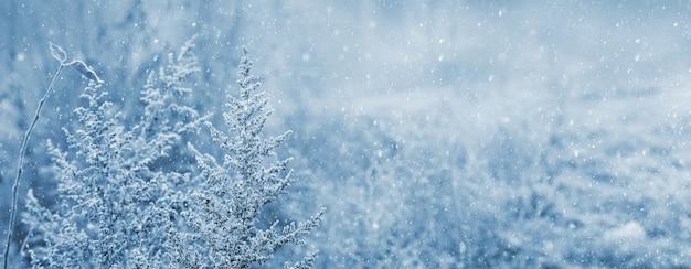 降雪時の雪に覆われた植物の茂みのある冬の景色。冬とクリスマスの背景