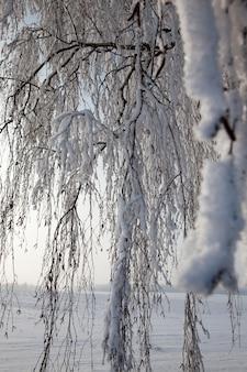 Зимняя погода в парке или лесу и лиственных деревьях