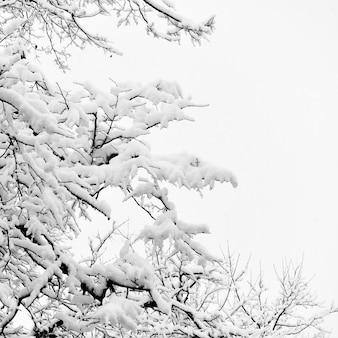 Зима зимние ветви деревьев в снегу. черно-белое, место для текста