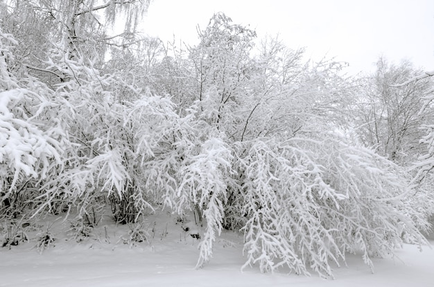 Winter with snow on trees