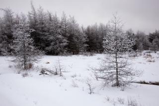 Winter wonderland  snow  nature