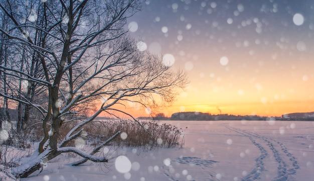 木々と雪のある冬のワンダーランド。降雪とクリスマスの挨拶の概念