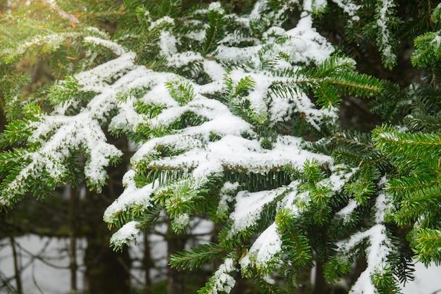 冬 Premium写真