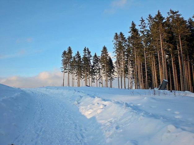 冬の雪の冬の樹脂
