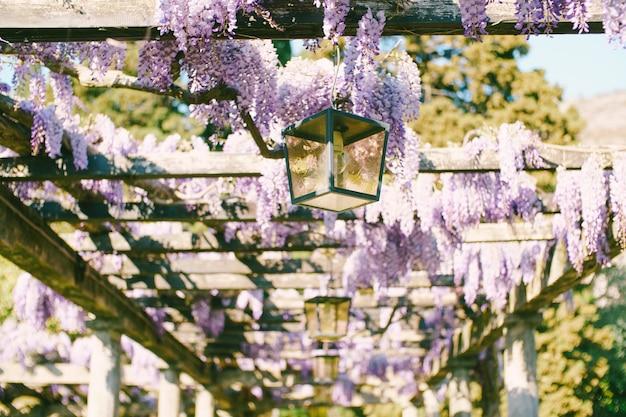 가로등이 매달려있는 아치의 나무 기둥을 따라 구불 구불 한 등나무.