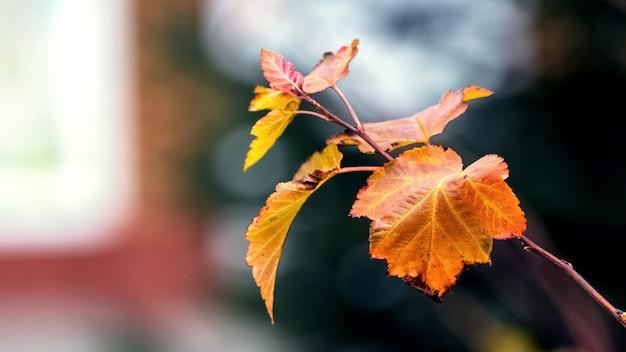 ぼやけた背景に枯れた紅葉