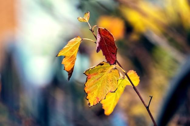 ぼやけた背景に枯れた明るい紅葉
