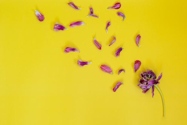 花びらの枯れた花