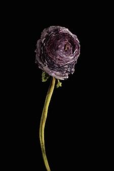 枯れた花。黒い壁に枯れた花。