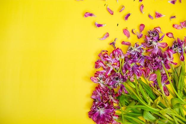 枯れた花の背景。黄色の背景に枯れたチューリップ。高品質の写真