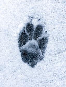 След волка или собаки на снегу