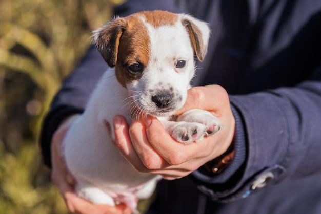 女性は動物保護施設から子犬を養子にしました。