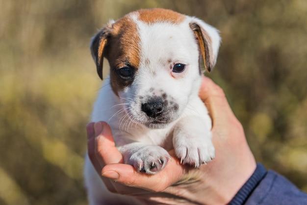 Женщина усыновила щенка из приюта для животных.