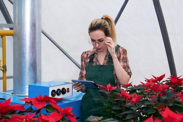 Женщина-инженер-агроном работает с оборудованием в теплице, где растут красные цветы пуансеттии