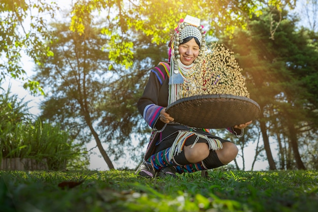 Woman akha hill select raw coffee bean after harvest arabica coffee berries in basket wood