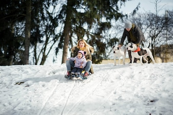 Woman and little girl play on the sledge while man holds two American bulldogs