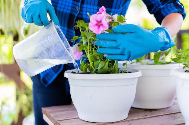 Женщина у себя дома на чердаке растения красивые цветы в горшках. ухаживает за растениями. меняет землю. полив цветов.