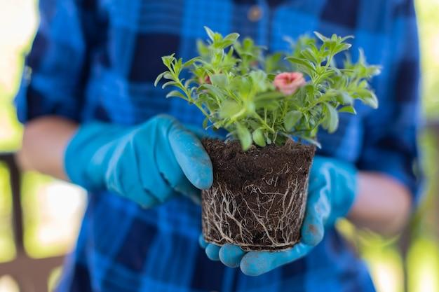 Женщина у себя дома на чердаке растения красивые цветы в горшках. ухаживает за растениями. меняет землю.