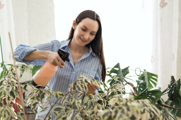 Woman in blue shirt sprays household houseplants, flower greenhouse, plant care concept
