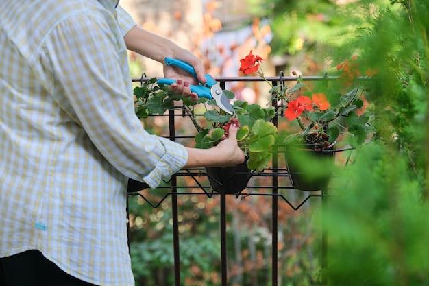 家の鉢植えの世話をする女性。花、コピー領域の近くの剪定はさみを持つ女性