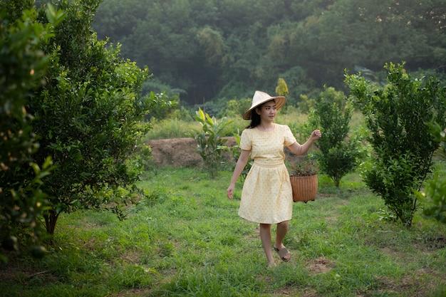 Корзина нося женщины в плантации апельсинового дерева