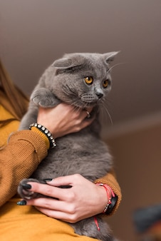 Woman carrying grey british shorthair cat