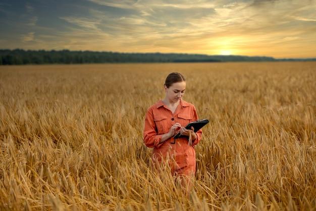 일몰에 농업을 위한 작물의 성장을 확인하는 밀밭의 여성 백인 기술자 농업경제학자. 농업 및 수확 개념입니다.