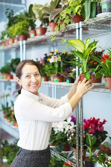 Woman chooses dieffenbachia  at flower shop