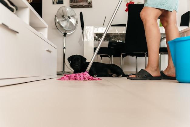 犬が彼女を見ている間、モップで居間を掃除している女性。