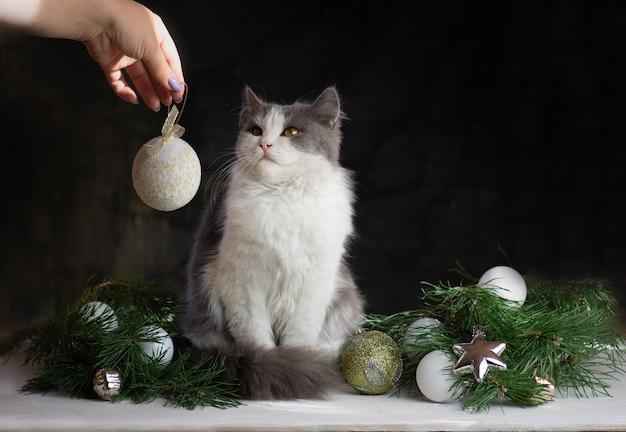 女性は猫によって壊れたクリスマスツリーをきれいにします