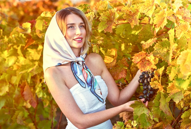 Woman collecting grapes from the vineyard
