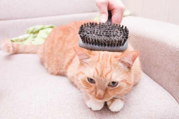 Женщина расчесывает кошку, расчесывая шерсть животного специальной массажной щеткой