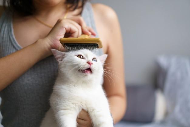 Женщина расчесывает милого белого котенка британской короткошерстной кошки щеткой и наслаждается. чистка шерсти полосатого кота лежа. домашнее животное. глядя на копировальное пространство. баннер