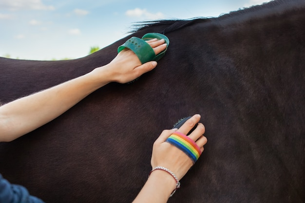 A woman combs and brushes a horse with a brush and a scraper