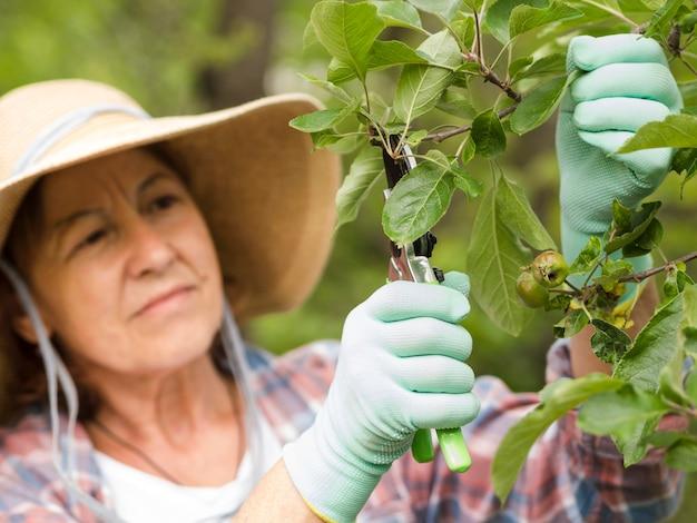 Женщина срезает листья с растения