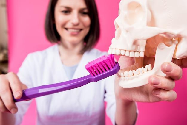 大きな歯ブラシを使用して人工頭蓋骨の歯を磨く女性歯科医