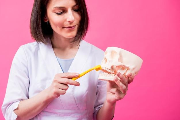 単一の房状の歯ブラシを使用して人工頭蓋骨の歯を磨く女性歯科医