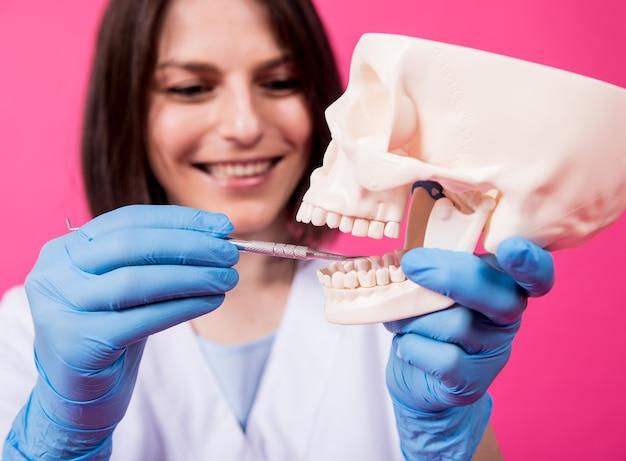 女性歯科医が滅菌歯科用器具で人工頭蓋骨の口腔を検査します