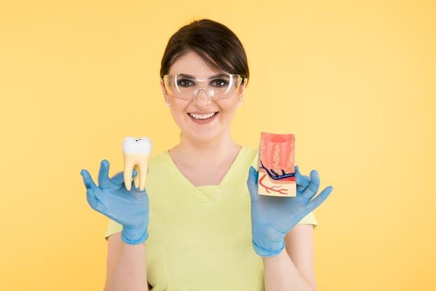 노란색 배경 위에 고립 된 치아 모델과 함께 포즈를 취하는 여자 치과 의사.
