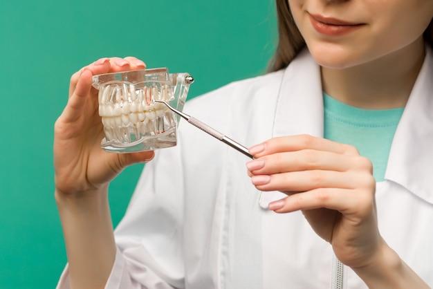 Женщина-стоматолог, показывающая на устном осмотре модели челюсти