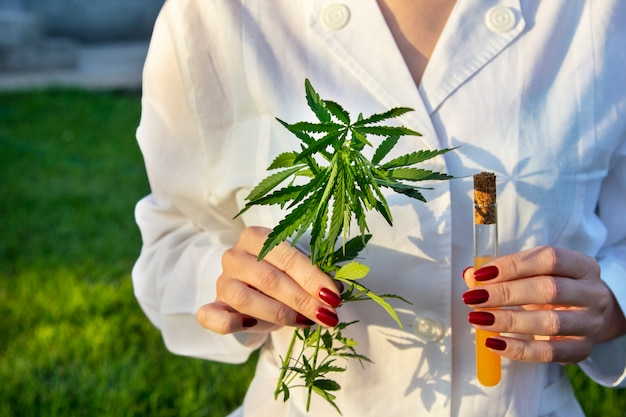 Woman doctor holding branch cannabis and test tube with natural hemp oil marijuana