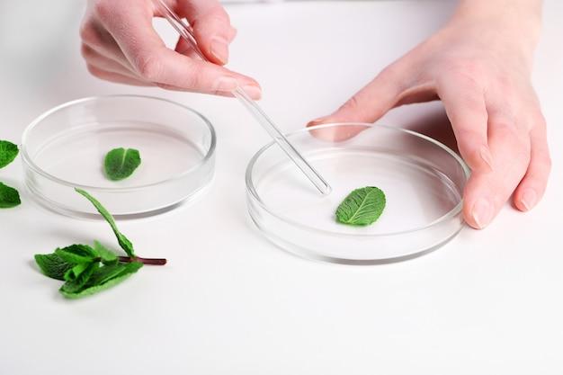 실험실에서 녹색 식물을 검사하는 여자를 닫습니다.